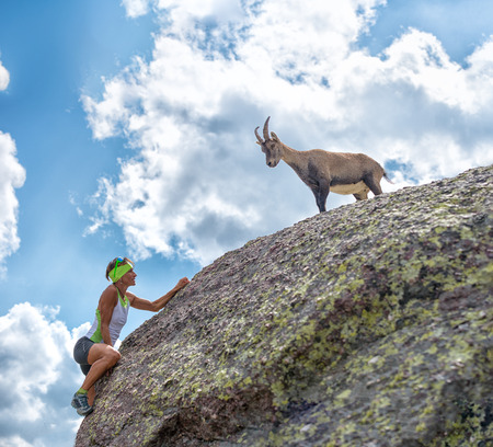 encounters: Woman climber encounters a mountain goat on the rock