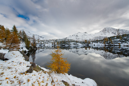 silently: Contrast autumn winter in the alpine lake with snow and colorful plants Stock Photo