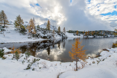 silently: Small Larch near mountain lake in autumn with the first snow Stock Photo