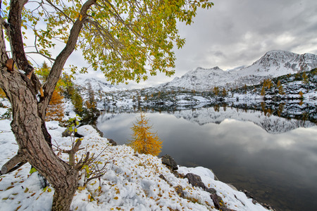 silently: Larch autumn leaves near the alpine lake with the snow