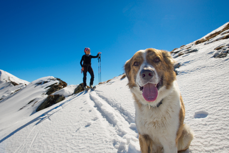 Dog in the mountains in the snow with mistress in alpine skiing