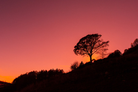 red sky: Mountain red sky with tree at sunset