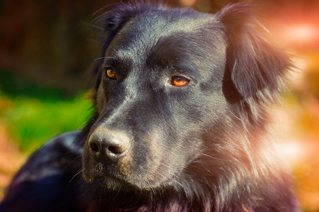 sitter: particular of young black dog in  a sunny day