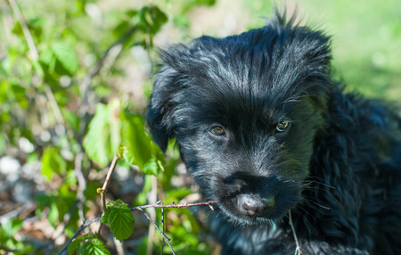 sitter: particular of young black dog in the nature