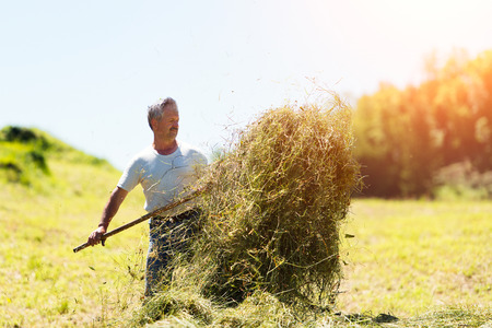 Man farmer turns the hay with a hay fork  in the italians alps