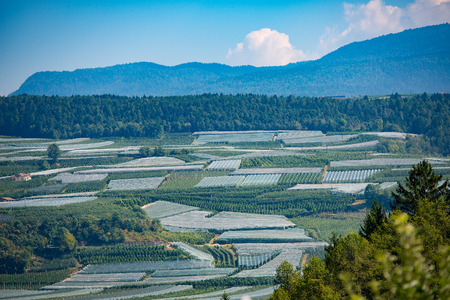 non: Crops of apples from Val di Non in Trentino Italy in late summer Stock Photo