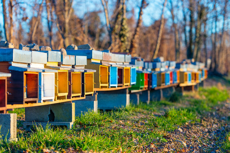 Bee hives colored to stand side by side on the field in northern Italy