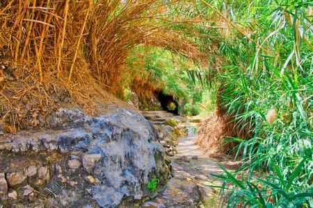Ein Gedi National Park in Israel in spring