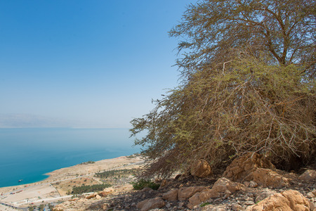 Near the oasis of  Ein Gedi In the background the Dead Sea in Israel in spring Stock Photo
