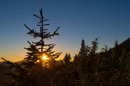 Sun in the mountain pines at sunset.