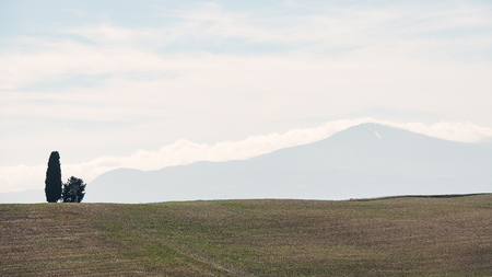 Panorama with a cypress and in the distance Mount Amiata. Tuscany Italy Stock Photo