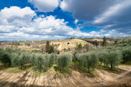 Olive groves and vineyards in Chianti valley in Tuscany Italy