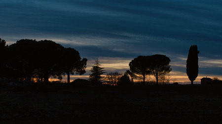 Tuscany Italy. Cypresses and other plants in evening silhouette at sunset