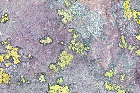Lichens on rocks of intrusive Lombard verrucano rock 스톡 콘텐츠