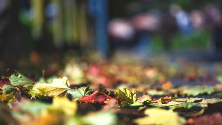 Autumn. Leaves just fallen from the plants on the sidewalk