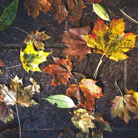 Autumn leaves fallen to the ground during rain