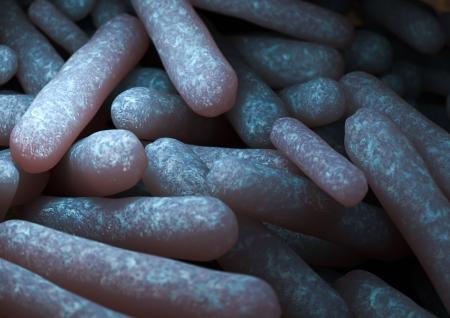 rendering of an Escherichia Coli bacteria Stock Photo - 14237036