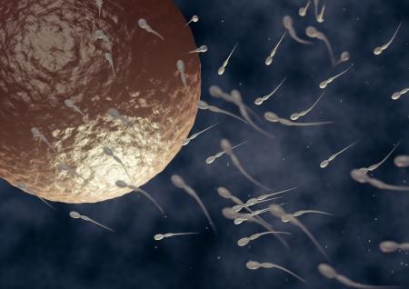 render of spermatozoa fecundating an ovule
