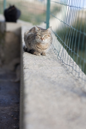 Estray cat photo
