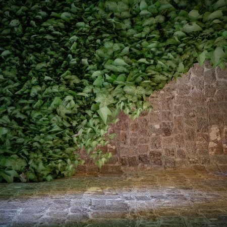 ivy wall: wall with ivy