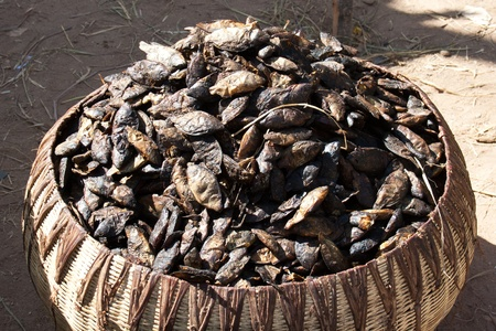 Dried fish caught in the River Niger in Mali (Acrica). photo