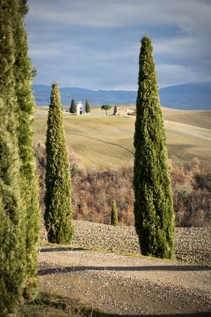 Egyház között fenyők, Toszkána (Olaszország).