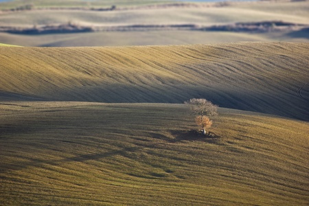 Lonely oak tree in the Tuscan countryside, Italy. Stock Photo - 12124710