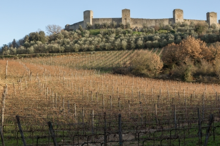 Vineyards in front of the medieval walled town of Monteriggioni in Tuscany, Italy