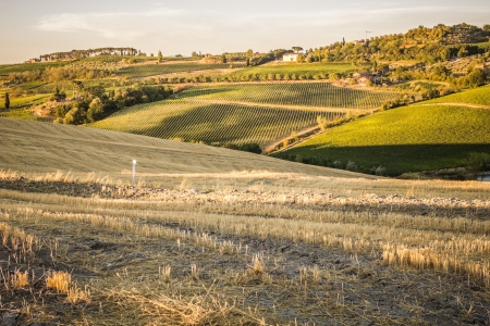Rolling hills cultivated near Montepulciano, Tuscany, Italy