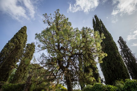 Green trees in the Garden of Ninfa. In the province of Latina, Italy, Europe.