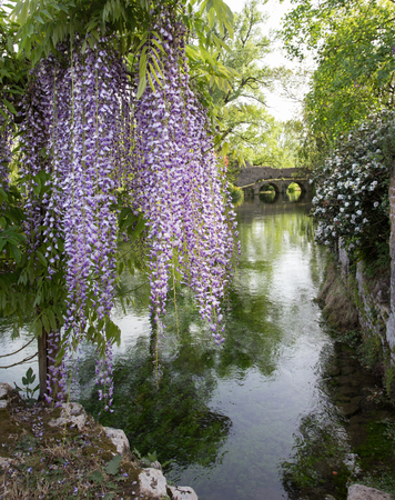 Plant of wisteria and historic bridge in the province of Latina, Italy, Europe.