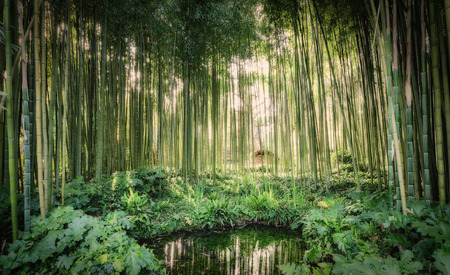 Cannes de bambou autour d'un petit lac dans le jardin de Ninfa, dans la province de Latina, en Italie, en Europe. Banque d'images - 78390227