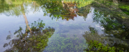 Reflections of the trees and underwater vegetation in the pure river water.