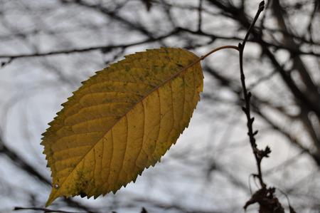 leaden: autumn