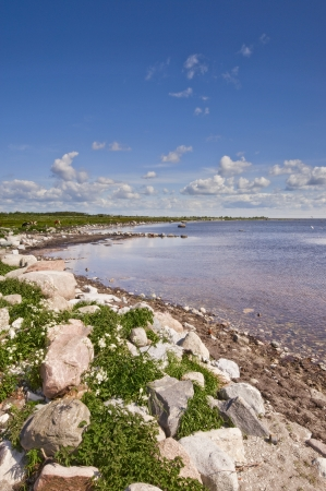 oland: Coastline with stone and grass in a sunny day at Oland island in Sweden