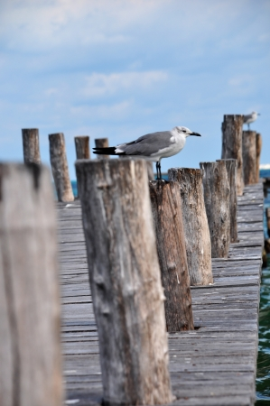 wooden pier in cancun photo