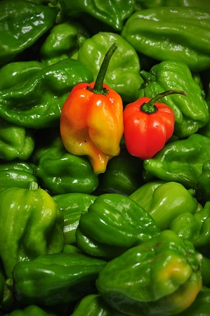 hottest: the real hot chilli peppers from mexico