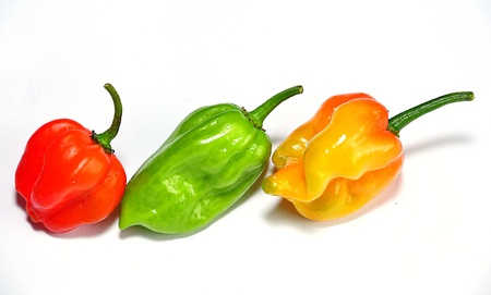 the real hot chilli peppers from mexico photo