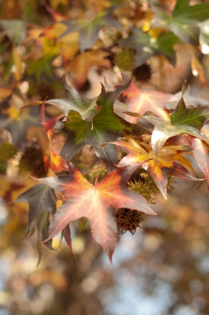 the beautyful colors of the leaves in autumn