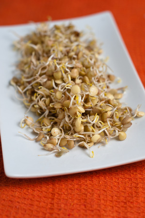 delicious lentil sprouts ready to be eated Stock Photo - 28884201