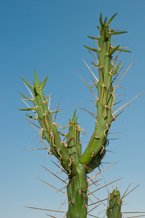 a cactus against a blue sky during a sunny day
