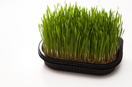 wheatgrass on a white board