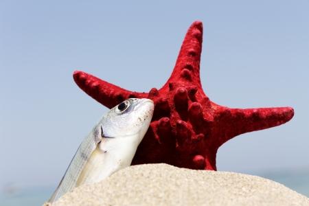Starfish and fish on the sand