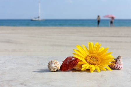 sea flowers: Daisy flower and shells on a background of sand and sea Stock Photo