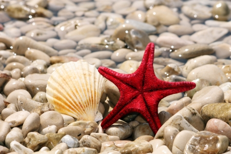 Starfish and shells on the beach on a background of stones Stock Photo
