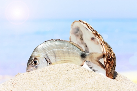 tricky: Bream and shell on the sand of tricky