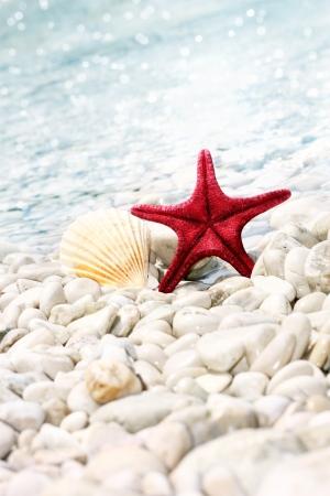 Star e seashell sulla spiaggia