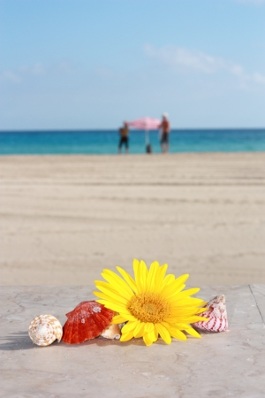 ie: Frame of shells and daisies on the sand   2