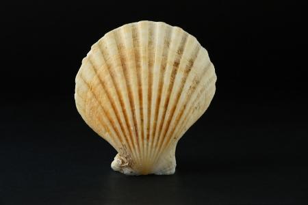 Shell on dark background Stock Photo