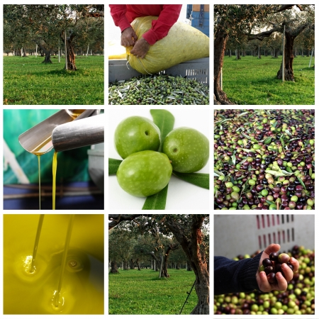 Processing of olives and olive oil photo